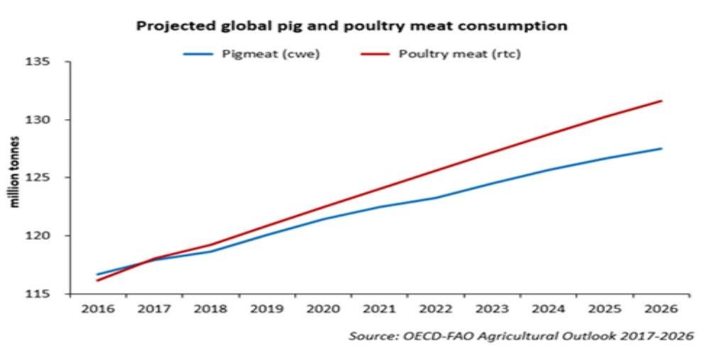 Hvad er CO2 effekten af at halvere svineproduktionen i Danmark?