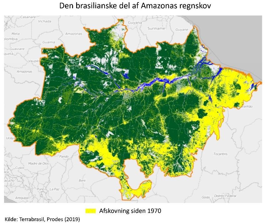 Hvor Meget Af Amazonas Regnskov Er Der Egentlig Tilbage