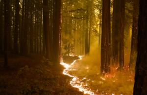 Californiens naturbrande