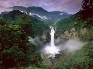 Bliver Amazonas til savanne?