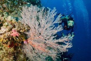 Australiens koralrev