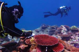 Blegning af koralrev