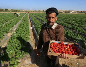 Høstudbytte i Mellemøsten