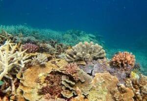 Korallerne har det godt
