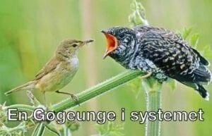 En gøgeunge i systemet