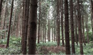 Træer, godt eller skidt?