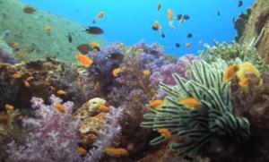 Der er mange koraller