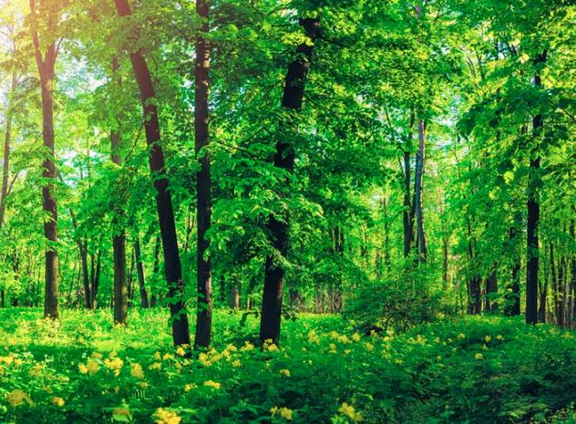 Svigter træerne os?